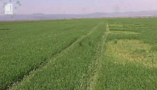 Има ли политическа воля за решаване на вечния проблем с кражбите на земеделска продукция?