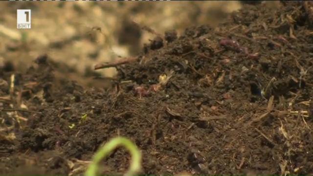 Ферма за производство на био тор от калифорнийски червеи