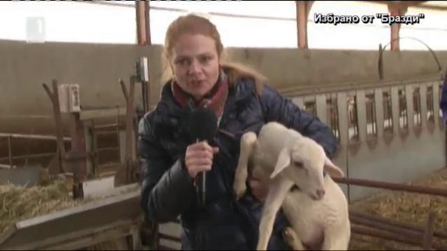 Защо овцете в Испания излизат все по-рядко на паша?