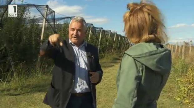 Разговор за ябълките в една от най-големите ябълкови градини в България