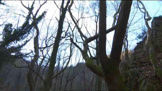 Кестеновите гори
