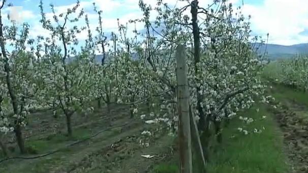 Овощната градина на бъдещето