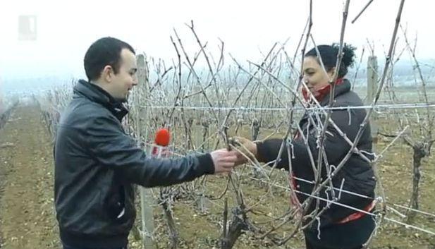 Ромската интеграция в действие - лозари в с. Брестовица и Перущица