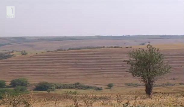 Зелените плащания в общата селскостопанска политика след реформата