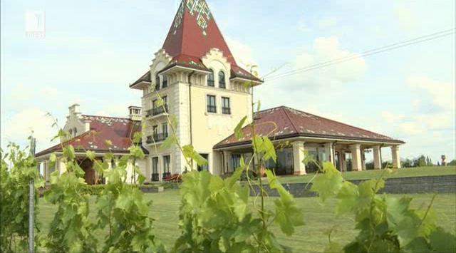 Палич - минало и бъдеще на винопроизводството във Войводина