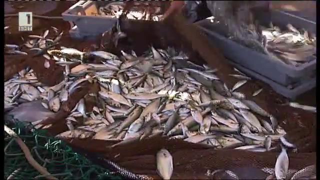 """Сериозни загуби за България от Оперативна програма, сектор """"Рибарство"""""""