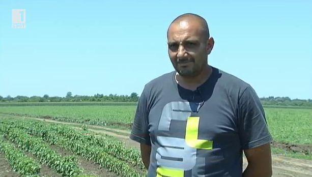 Едри от Горни Дъбник – за малкия фермер и големите европейски пари