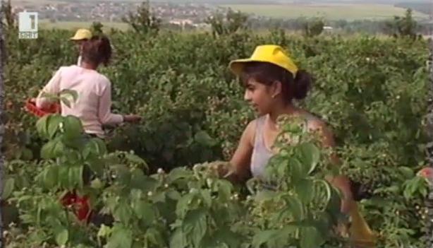 Проблемът с работната ръка в земеделието - има ли решение?