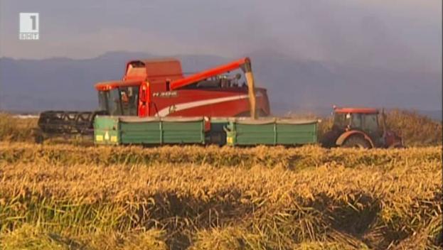 Жътвата - големият празник на българското земеделие