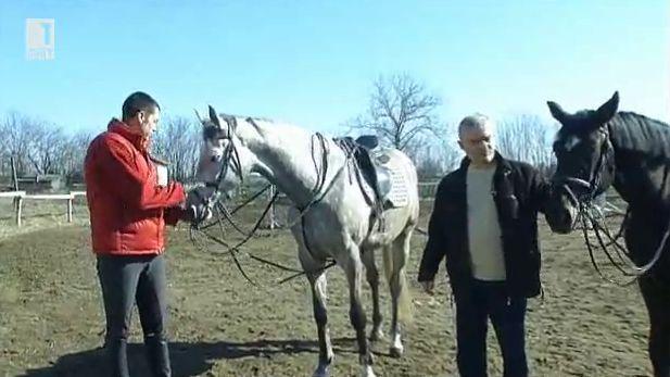 Съхранената дунавска порода коне