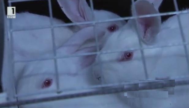 Какви въпроси поставя фалитът на една ферма за зайци в България?