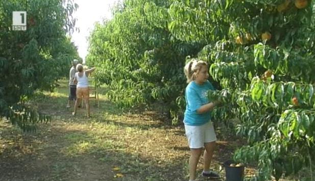 Сезонната работна ръка в земеделието
