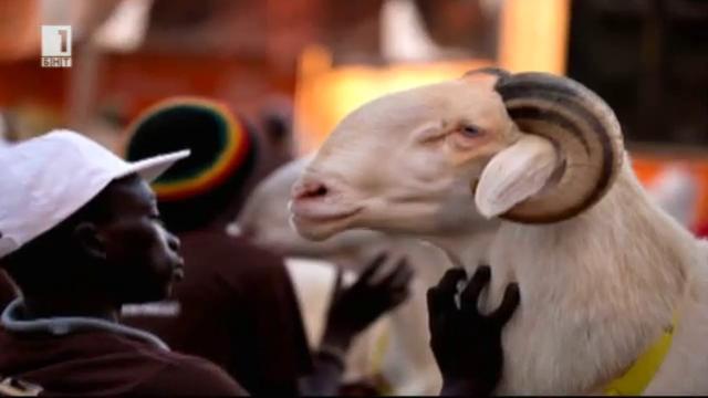АГРО любопитки: Телевизионни шоу програми с участието на животни