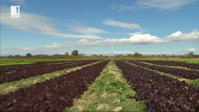 Защо най-големите производители на салати в България са малки на фона на техните европейски колеги?
