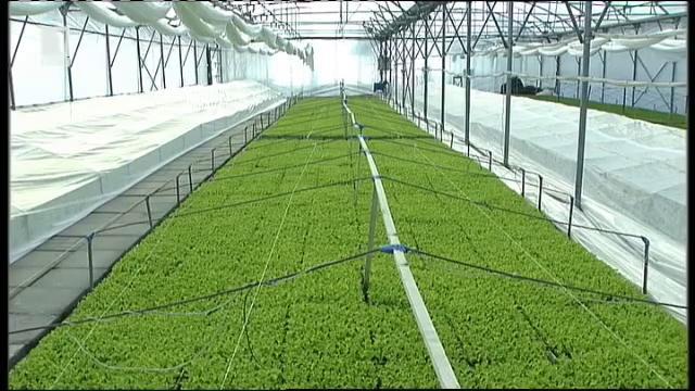 Завод за разсад или детска ясла за зеленчуци – вече и в България