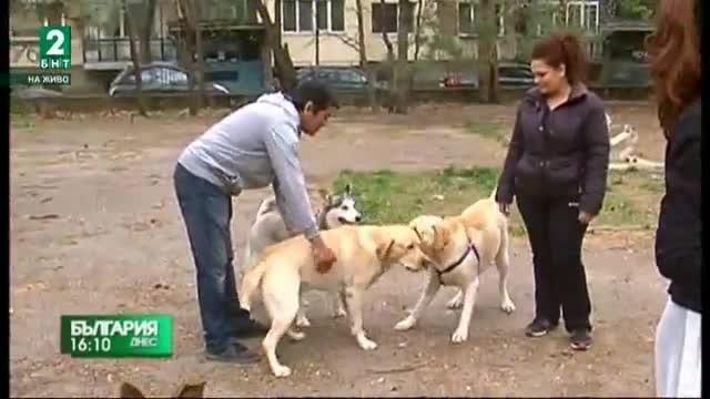 Недоволство на собствениците на кучета в Русе