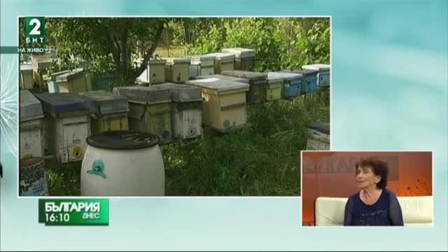 Проблемите на пчеларите