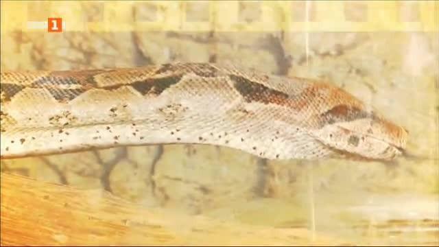 Още за змията, избягала в търговски център в Пловдив
