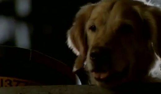 Кибер пес
