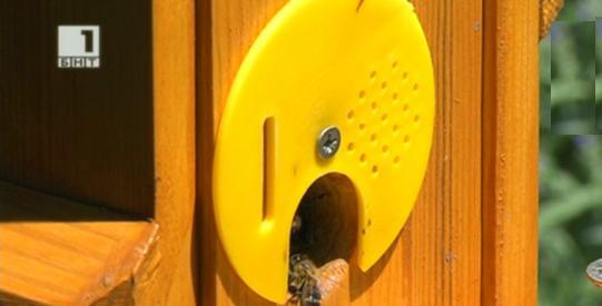 Зелена светлина на фокус: Пчели в градска среда
