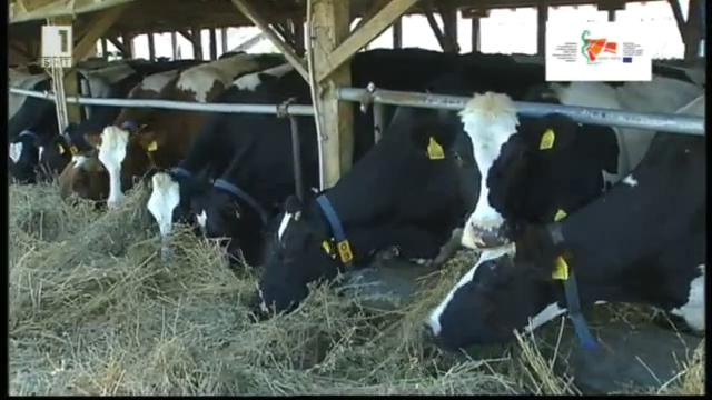 Европа инвестира в селските райони: Организация на млекопроизводителите в община Раковски