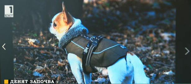 Върнаха откраднати кучета срещу откуп
