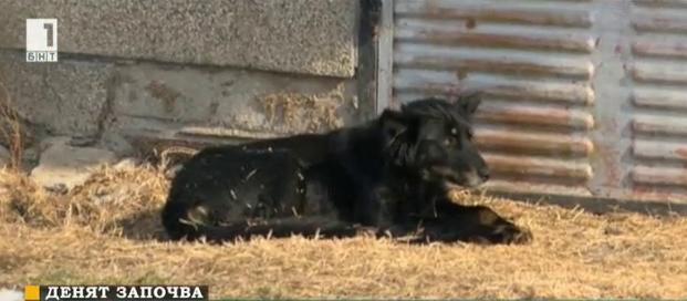 В Свищов въвеждат мерки срещу нерегистрирани и необезпаразитени кучета