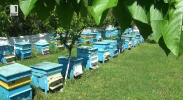 Пчели масово измират в село Зафирово