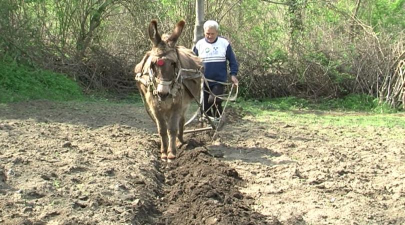 Желязното рало и магарето в ХХІ век