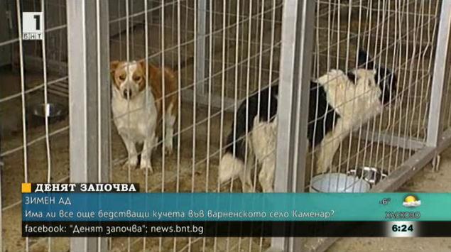 Има ли все още бедстващи кучета във варненското село Каменар?