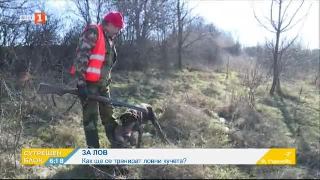 Как се тренират ловни кучета