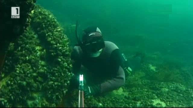 Под морските вълни с един писател - харпунджия