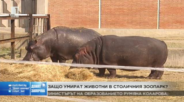 Причината за смъртта на животните в столичния зоопарк