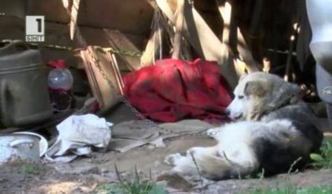 Отровени кучета в Община Елена