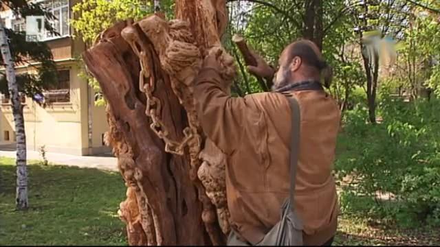 Нов живот за дървета пред изсичане