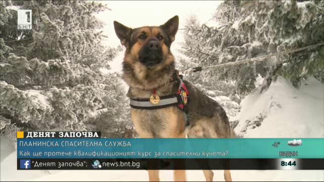 Провежда се квалификационен курс за кучета-спасители към ПСС