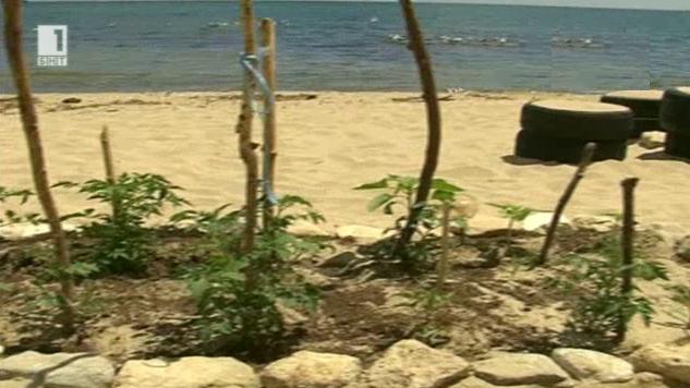 Зеленчукова градина на плажа