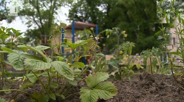 Явлението Зеленчукова градина пред блока