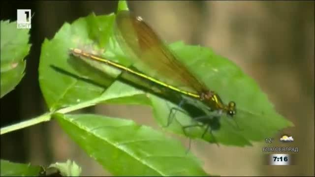 Биодизайн - да откриеш добрите решения в природата