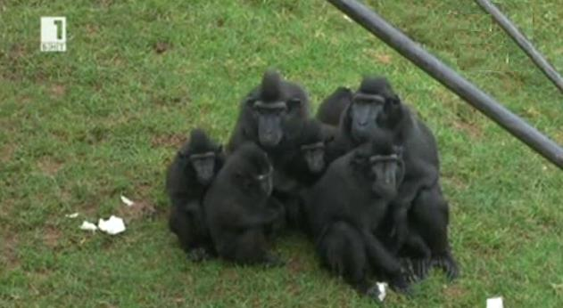 Маймуни на диета
