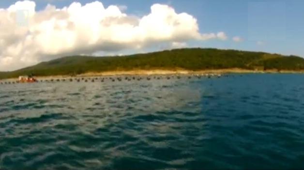 Под морските вълни: Маслен нос
