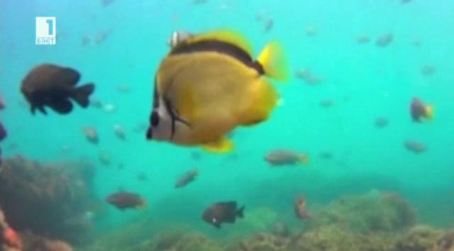 Подводни картини