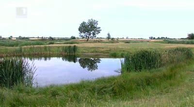 Зелена светлина на фокус: За Биволаре и чаплите край река Вит