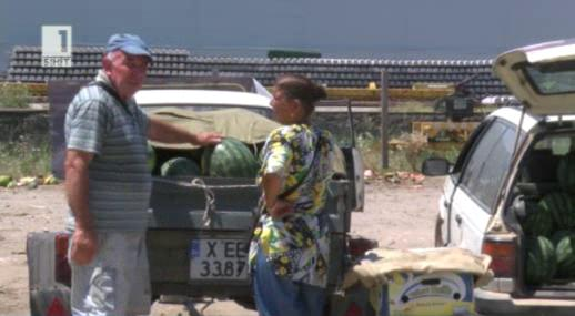 Загуби на реколтата от дини в Любимец