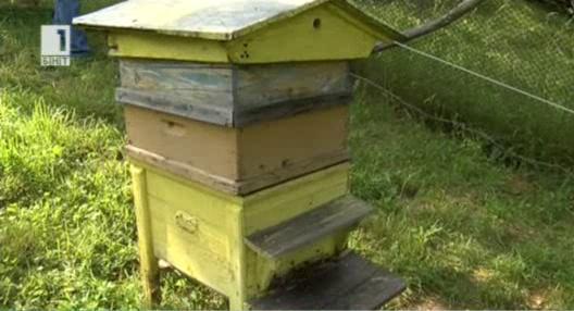 Гладни мечки нападат пчелини в Севлиевско