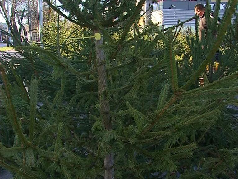 Конфискуваха над 160 незаконни живи елхи в Пловдив