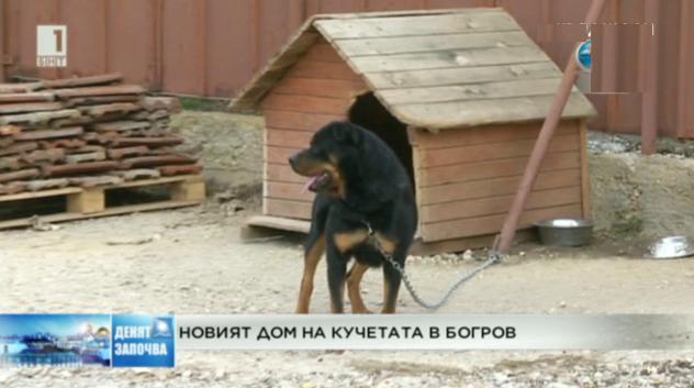 Новият дом на кучетата в Богров