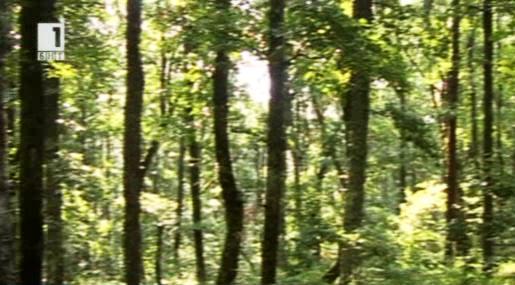 Нов метод за изсичане на дървета