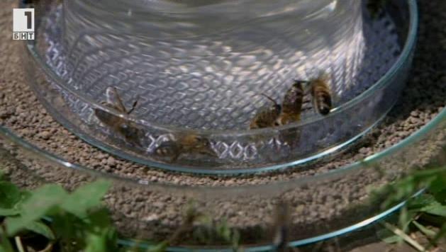 Зелена светлина: Медоносни пчели-сапьори