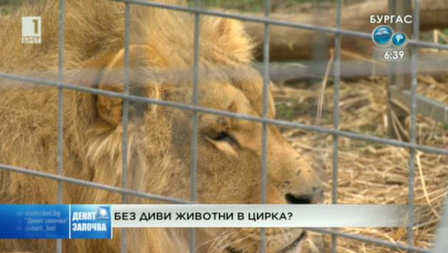Без диви животни в цирка?